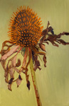 Coneflower and Pink Leaf Blades
